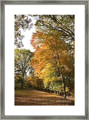 A Peacefall Path Framed Print by Jay Nodianos
