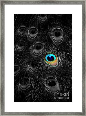 A Peacock Feather Framed Print by Mike Nellums