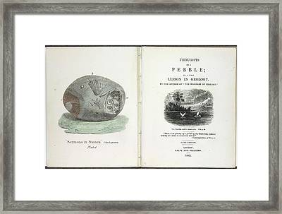 A Pebble Framed Print by British Library