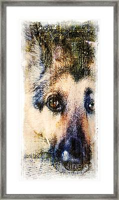 A Penetrating Gaze Framed Print