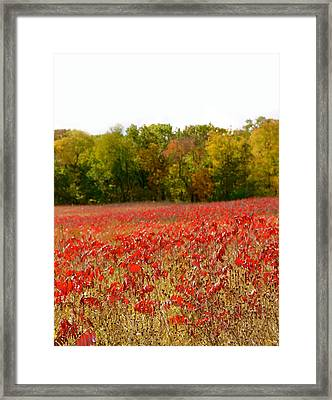 A Perfect Day Framed Print by Art Spectrum