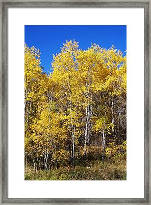 A Perfect Fall Day Framed Print