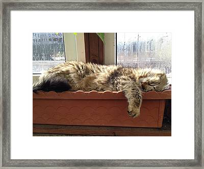 The Perfect Napping Spot Framed Print