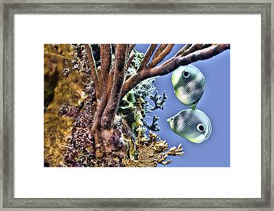 Two Butterfly Fish And Coral Reef Framed Print by Paula Porterfield-Izzo