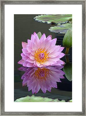 A Perfect Reflection Framed Print by Cindy McDaniel
