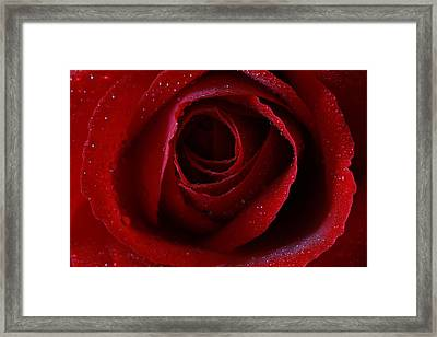 Framed Print featuring the photograph A Perfect Rose by Keith Hawley