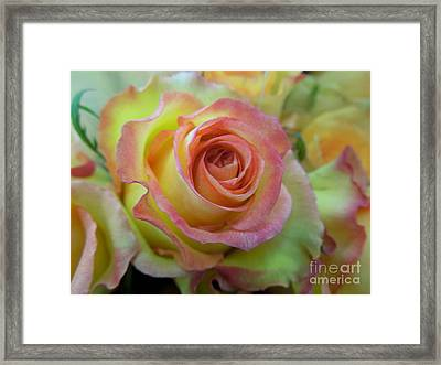 A Perfect Rose Framed Print by Renee Trenholm