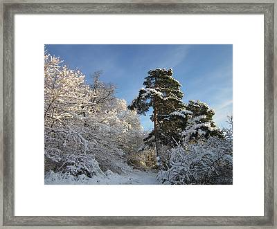 A Perfect Winterday Framed Print