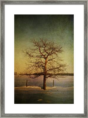A Pictorialist Photograph Of A Lone Framed Print by Roberta Murray