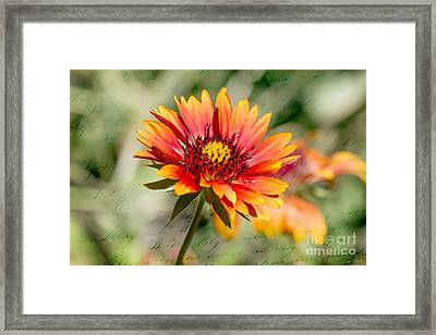 A Picture Of Cheer Framed Print by Linda Lees