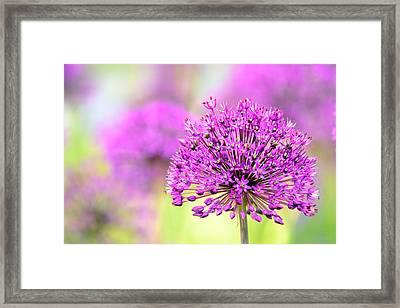 A Pink Flower Framed Print by Tommytechno Sweden