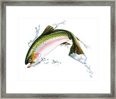 A Pink Salmon Jumping Out Of The Water Framed Print by Leonello Calvetti