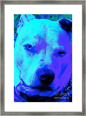A Pit Bull's Love Is Forever// End Dog Fighting Framed Print by Q's House of Art ArtandFinePhotography