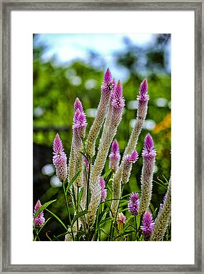 A Place Of Delight Framed Print