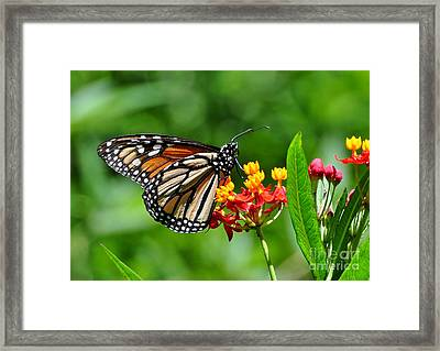 A Place To Settle Down Framed Print by Kathy Baccari