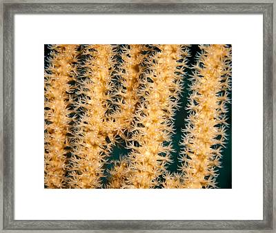 A Polyp Line Framed Print by Jean Noren