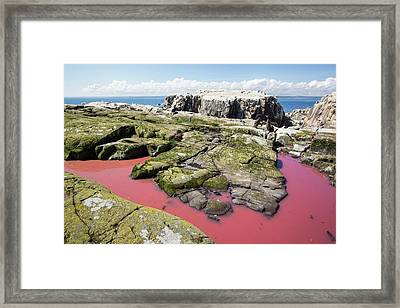A Pool Coloured Red From Algae Framed Print