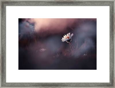 A Poor Lonesome Paquerette Framed Print