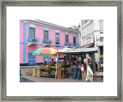 A Pop Of Tropical Color Framed Print