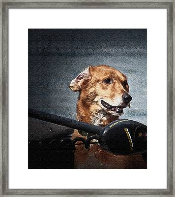 A Portrait Of A Golden Retriever Framed Print by Deborah Klubertanz