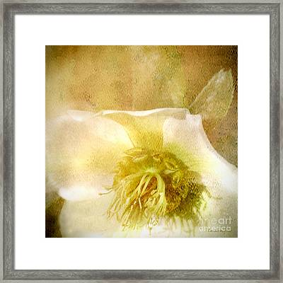 Framed Print featuring the photograph A Prayer by Chris Armytage