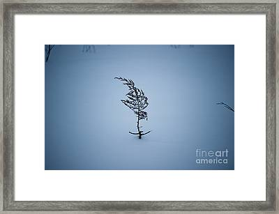 A Prayer For Spring... Framed Print