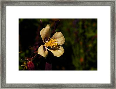 A Pretty Flower In The Sun Framed Print by Jeff Swan