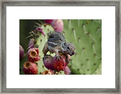 A Prickly But Tasty Treat  Framed Print