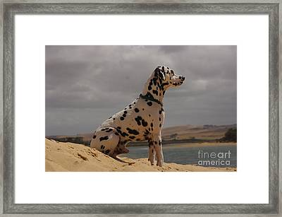 A Prince Of A Dog Framed Print by Blair Stuart