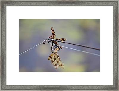 A Private Moment Framed Print
