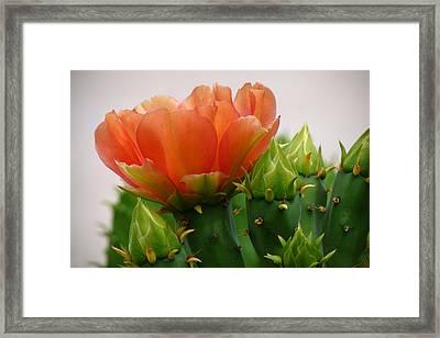 A Profile In Orange Framed Print by Cindy McDaniel