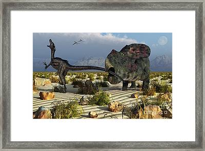 A Protoceratops Biting The Tail Of An Framed Print by Mark Stevenson