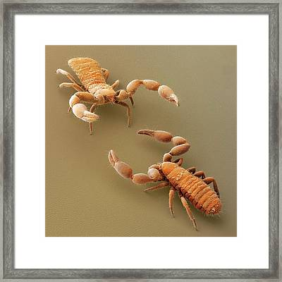 A Pseudoscorpion Challenge (sem) Framed Print by Power And Syred