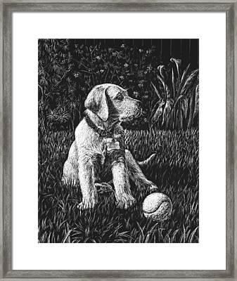 A Puppy With The Ball Framed Print by Irina Sztukowski