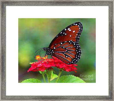 A Queen Framed Print by Marty Fancy