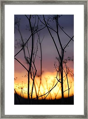 Framed Print featuring the photograph A Queen's Sunset by Jani Freimann