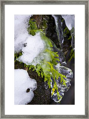 A Quick Freeze Framed Print by Joe Doherty