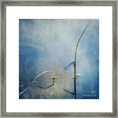 A Quiet Moment Framed Print by Priska Wettstein