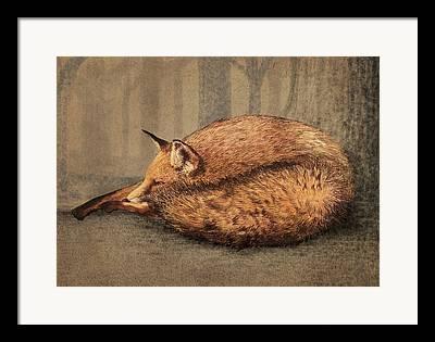 Tree Fox Framed Prints