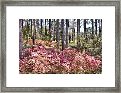 A Quiet Spot In The Woods Framed Print
