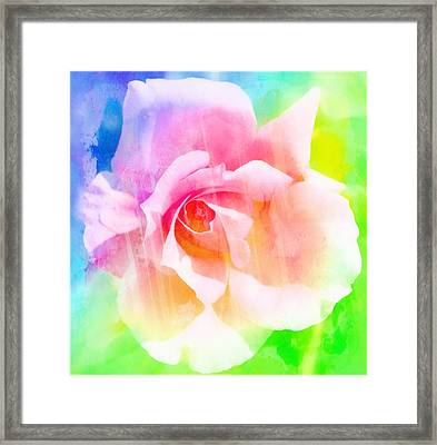 A Rainbow Of A Rose Framed Print by Cathie Tyler