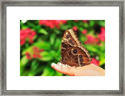 A Random Walk In The Butterfly Garden Framed Print