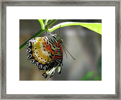 A Real Beauty Framed Print by Jennifer Wheatley Wolf
