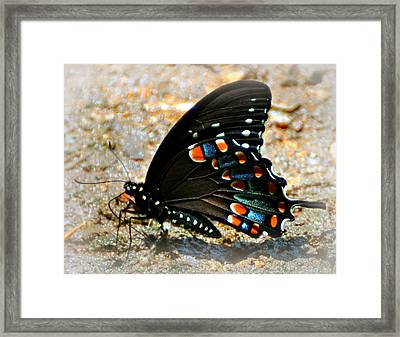 A Real Beauty Framed Print by Marty Koch