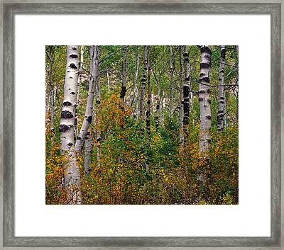 A Really Knotty View Framed Print