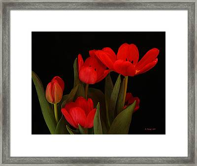 A Red Tulip Day Framed Print
