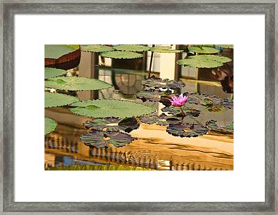 A Reflection Framed Print by Samantha Eisenhauer