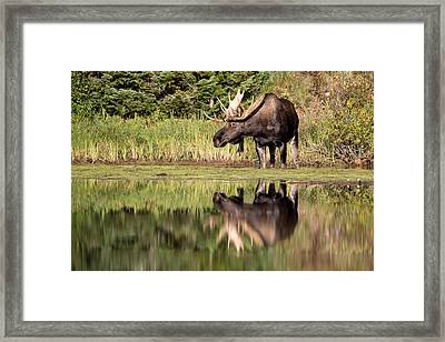 A Reflective Mood Framed Print by Jack Bell