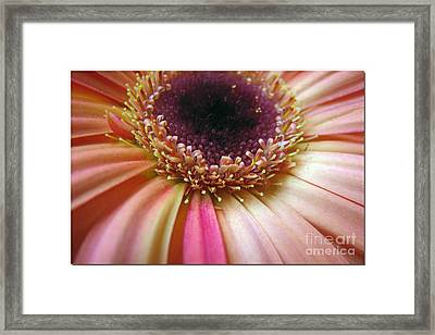 A Reminder Of Spring Framed Print by Chris Anderson