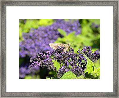 Framed Print featuring the photograph A Resting Traveler by Teresa Schomig